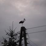 24-244-Ukraine2012IMG_0085-244